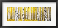 Panor Aspens Yellow Floor Fine Art Print