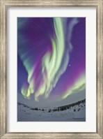 The Northern Lights in Churchill, Manitoba, Canada Fine Art Print
