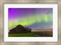 Purple Aurora over an old barn, Alberta, Canada Fine Art Print