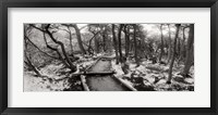 View of a trail through the trees of Tierra del Fuego National Park, Patagonia, Argentina Fine Art Print