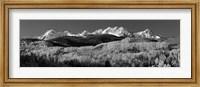 Colorado, Rocky Mountains, aspens, autumn Fine Art Print