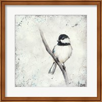 Chickadee II Fine Art Print
