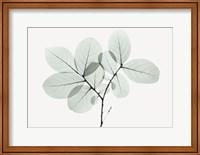 Myrtle Tree Fine Art Print