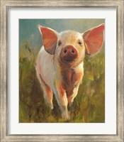 Morning Pig Fine Art Print