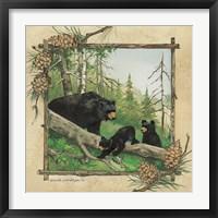 Black Bear & Cubs Fine Art Print
