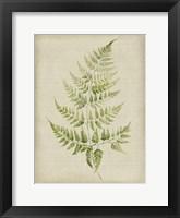 Fern 2 Fine Art Print
