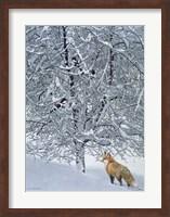 Fox In Snow Fine Art Print