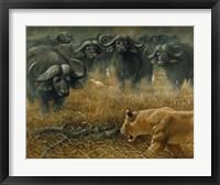 Lioness And Cape Buffalos Fine Art Print