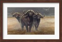 Cape Buffalos Fine Art Print