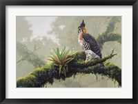 Ornate Hawk - Eagle Fine Art Print