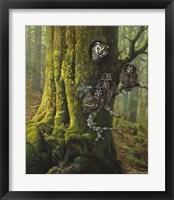 Tengmalms Owls Fine Art Print