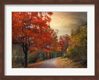 Autumn Maples Fine Art Print