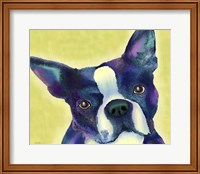 Boston Terrier 1 Fine Art Print
