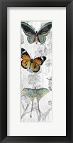 Butterflies Are Free 1 Fine Art Print