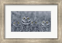 Pop of Color Burrowing Owl Family Fine Art Print