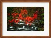 Fall in Smokies Fine Art Print
