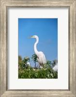 Florida Orlando Great Blue Heron Fine Art Print