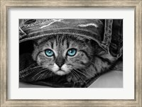 Pop of Color Kitten Fine Art Print