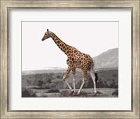 Pop of Color Lone Giraffe Fine Art Print