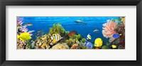 Life in the Coral Reef, Maldives Fine Art Print