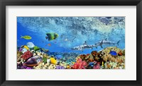 Reef Sharks and fish, Indian Sea Fine Art Print