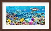 Sea Turtle and fish, Maldivian Coral Reef Fine Art Print