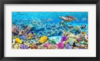 Sea Turtle and fish, Maldivian Coral Reef Fine Art Print