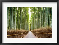 Bamboo Forest, Kyoto, Japan Fine Art Print