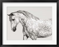 Leia, Andalusian Pony Fine Art Print
