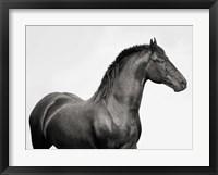 King Mamba, Stallion Fine Art Print