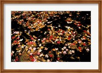 Red Maple Leaves in Reservoir, Boat Meadow Brook, Bear Brook State Park, New Hampshire Fine Art Print