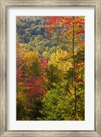 Fall in a Forest in Grafton, New Hampshire Fine Art Print