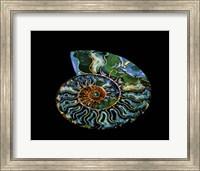 Nautilus I Fine Art Print