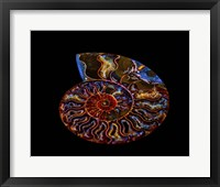 Nautilus II Fine Art Print