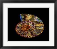Nautilus III Fine Art Print