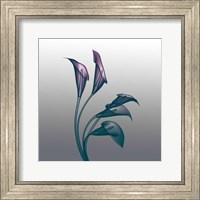 Ombre Calla Lilies X-Ray Fine Art Print