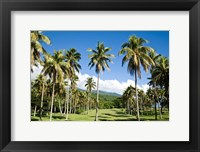 Golf course, Taveuni Estates, Fiji Fine Art Print