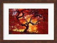 Japanese Maple, Darien, Connecticut Fine Art Print