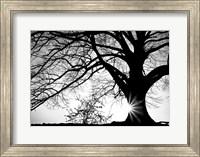 Old Tree Fine Art Print