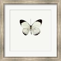 White Butterfly 1 Fine Art Print