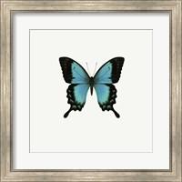 Blue Butterfly Fine Art Print