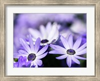 Purple Flowers Fine Art Print