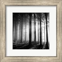 Wood Light Fine Art Print