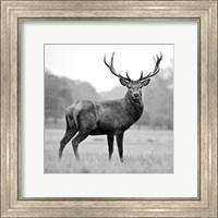 Proud Deer Fine Art Print