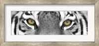 Tiger Panel Fine Art Print