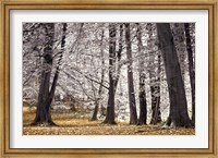 Autumn Trees And Leaves Fine Art Print