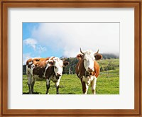 Country Cows Fine Art Print