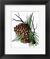 Pine Cone Fine Art Print