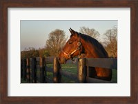 Horse At Sunset Fine Art Print