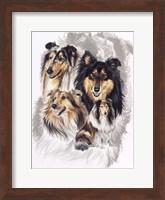 Collie Fine Art Print